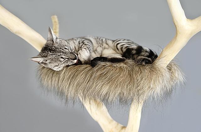 spící kočka na škrabadle
