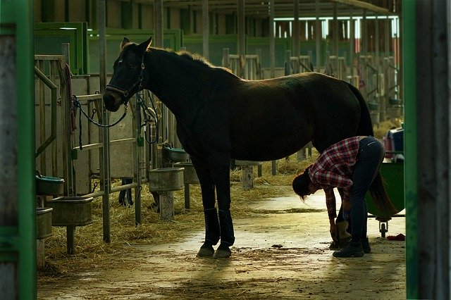 kůň, péče, kopyta, člověk